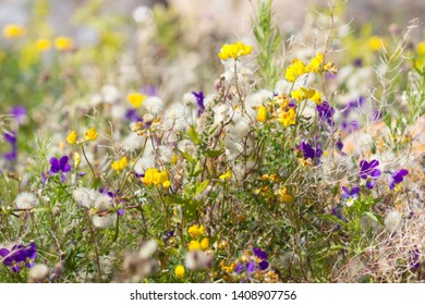 The thinnest and purest essence of summer - flowering grasses, blooming meadows. Favourite season. Motley grasses: violet, astra and deervetch