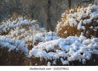 Thinny snow cover over a dry bush in a cold winter day