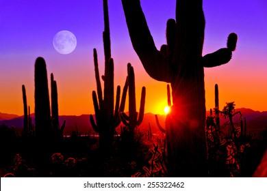 Third Sunset at Saguaro National Park near Tucson Arizona.