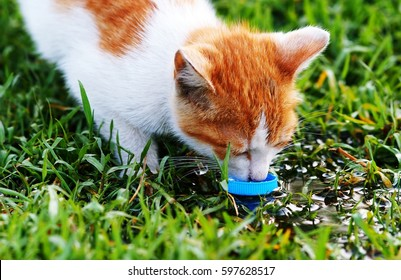 Thirsty Cat is drinking water from plastic cover