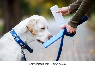 Thirsty dog drinking water from the plastic bottle in owner hands, close up photo. Friendship between human and dog. Pets and animals concept
