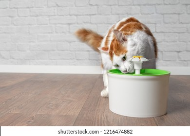 Thirsty longhair cat drinking water from a pet drinking fountain.