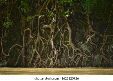 A Thirsty Root trying to get water on a River Bank