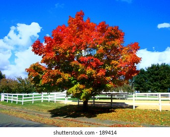 This is an abstract image of a colorful fall tree in New Jersey.