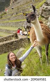 This Alpaca were seen in the ruins of Machu Picchu in Peru
