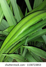 This is Amaryllis's leaves.It look slander and has green color.