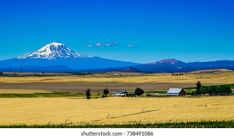 This amazing farm with a breathtaking view of a snow-capped Mount Adams near Yakima Washington.