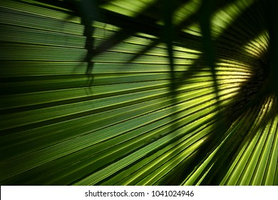This amazing  palm is great sun protection and keeps the temperature a few degrees cooler.