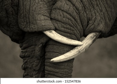 This amazing photo of two elephants interacting was taken on safari in Africa. The black and white conversion enhanced the feel.