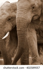 This amazing photo of two elephants interacting was taken on safari in Africa.