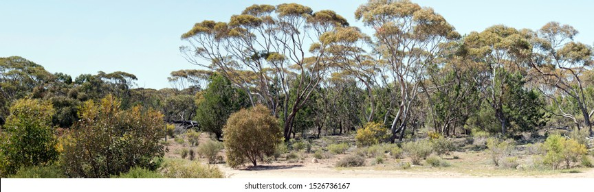 this is Australian scenery of trees and bushlland