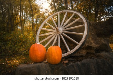 This autumn image shows a large rustic tractor wheel and two orange pumpkins in the middle of a rural, nature, tree lined setting.