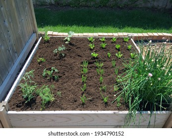 This backyard vegetable garden features raised planting beds, easily filled with rich new soil, and mulch for easy weeding and maintenance.
