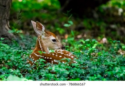 This beautiful fawn was resting in the tall grass and plants. His long ears reminded me of Bambi.