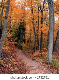 This is a beautiful walk in the park during fall.  Shot was taken in Gatineau, Quebec, Canada.