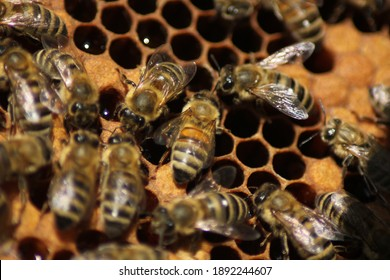 This is a bee-yard for adult worker-bee.