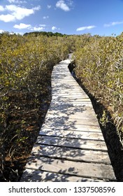 This boardwalk crosses the Waitangi river, then this mangrove swamp before the track reaches the Haruru Falls from the Waitangi Treaty Grounds.