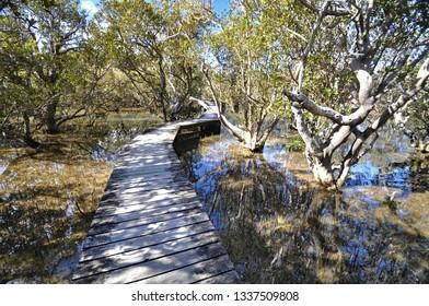 This boardwalk crosses the Waitangi river, then a mangrove swamp before the track reaches the Haruru Falls from the Waitangi Treaty Grounds.