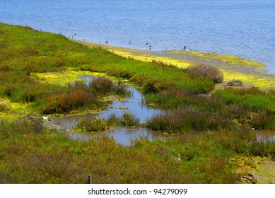 This is from Bolsa Chica Ecological Reserve in California.