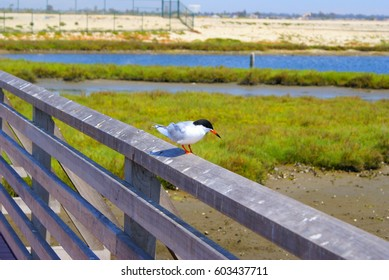 This is from Bolsa Chica Wetlands in California.