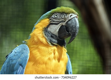 this is a close up of a blue and gold macaw