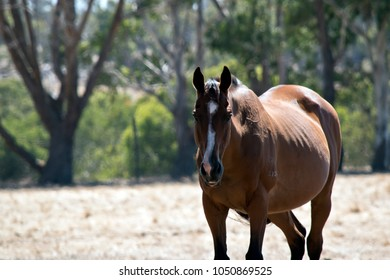 this is a  close up of a  brown horse