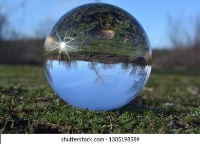 This is a crystal ball refraction photo that captured a group of little mushrooms. It was taken on our ranch in the western part of Northern California. On this photo I added a little sunshine flare.