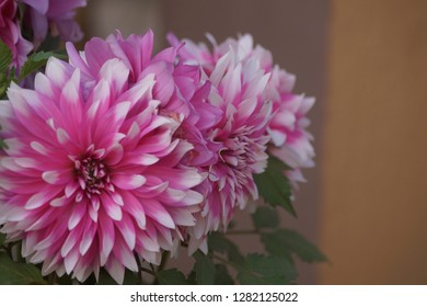 this is a dalia flower