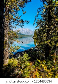 This is a distant view of the Tetons and its reflection in Leigh Lake, taken from  Leigh Lake Trail in Grand Teton National Park in Wyoming. Forest trees, shoreline and vegetation are in foreground.