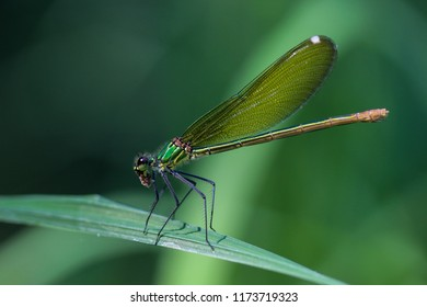 This dragonfly is eating an insect