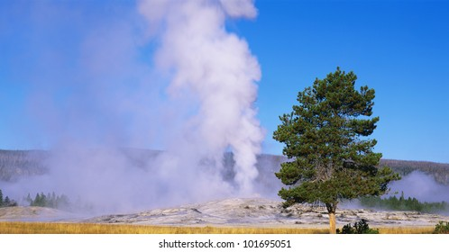 This is the famous Old Faithful geyser. The geyser is erupting at sunrise.