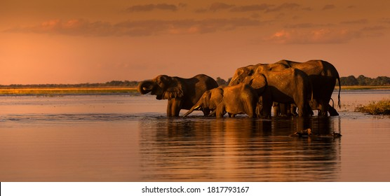 This fantastic sunset painted this herd of elephants who came to dring along the Chobe river in deep orange colours; this is African at its best.