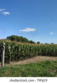 This field is located in central Illinois.