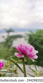 this flower is so beautiful so i took the photo, the color of this flower is pink and white and its so cute - Shutterstock ID 1942983328