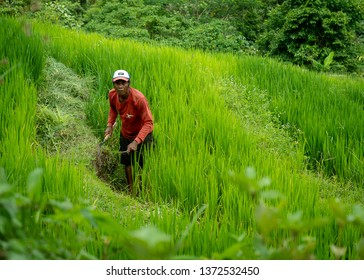 This happy farmer was photographed on the rice terraces of Ubud, Indonesia on 11 Feb 2019