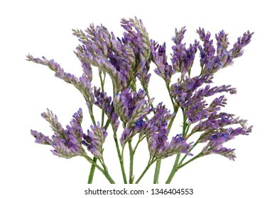 This is a herb for decorating bouquets blooming with small purple flowers. Isolated on white studio macro