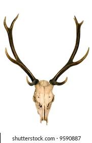 This is horns of deer very well kept