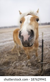 This horse loved having his photo taken. This photo was shot using a shallow depth of field. The horses nose/mouth are in focus for a funny perspective.
