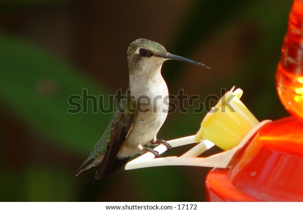 This hummingbird was just outside my window.  I had my camera ready and he returned several times allowing me the shot I wanted.