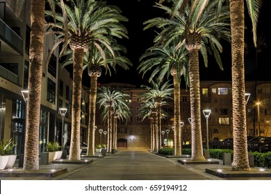 This is an image of a row of palm trees located in the heart of San Jose's downtown district. The scene is a well-lighted set of palm tree situated along a pedestrian walkway.
