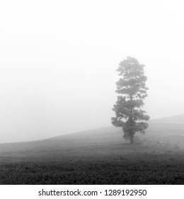 This image taken in Bandung, Indonesia. The weather when i take this images so miserable, pouring rain, mist everywhere. Fortunately the mist simplify the landscape, and reveal this hidden beauty.