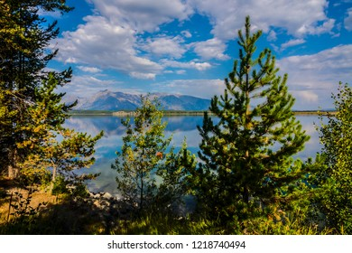 This image was taken through the woods near the Jackson Lake Dam in the Grand Teton National Park in Wyoming. The mountain peaks can be seen in the distance.