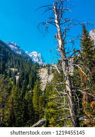 This is Inspiration Point above Jenny Lake in Grand Teton National Park in Wyoming. Teewinot Peak is seen in the distance.