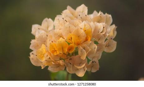 this is kagaj flower