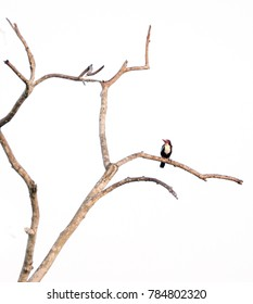 This is a kingfisher and branch.