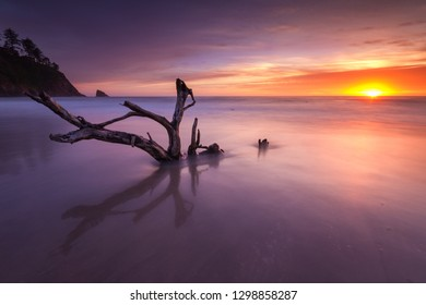 This is a long exposure of a dead tree with Oregon coast sunset.