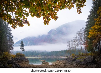 This magical tree on lake Laghi di Fusine with nice reflections on water on a foggy morning in autumn near Tarvisio in Italy