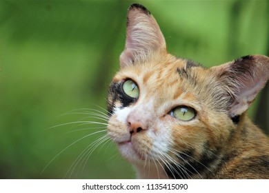 This  mammal is cat that has brown fur and black mingle , white mustache , light green eyes look up at it with some skepticism, with a backdrop of green foliage in the park.