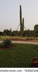 This is a natual beauty at cactus park in panchkula india.