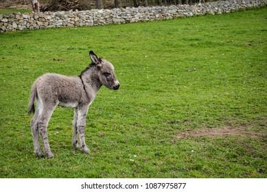 Baby Donkey Images, Stock Photos & Vectors | Shutterstock